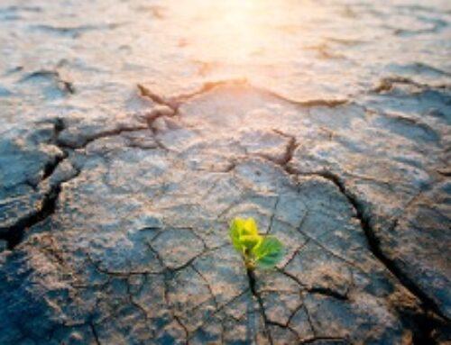 El Plan Andaluz de Acción por el Clima (PAAC)en información pública
